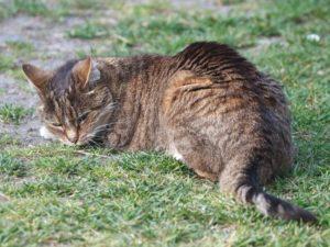 Kot na trawie jest szczęśliwy.
