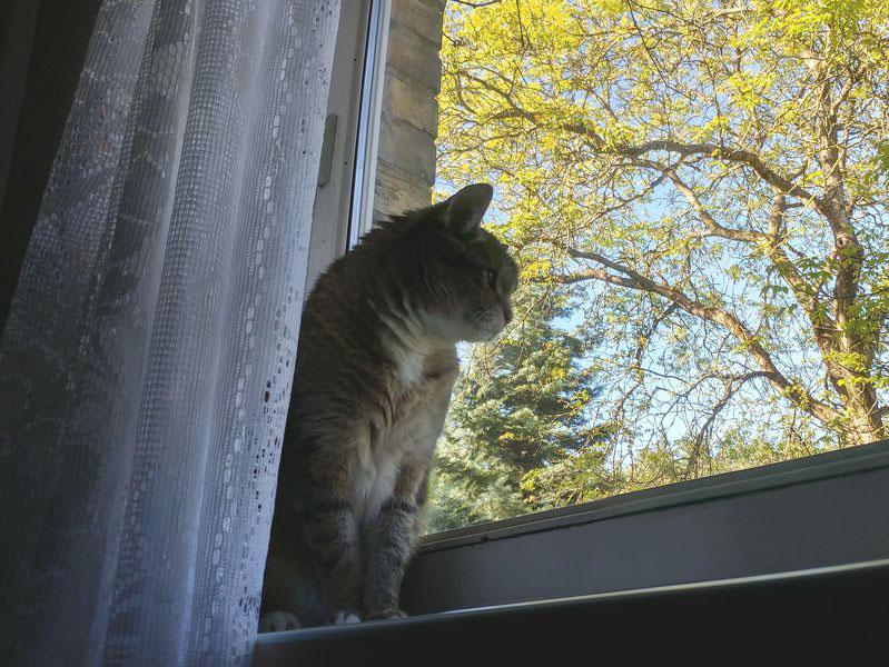 19-letni kot i świat za oknem