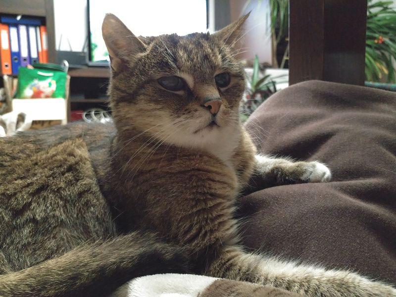 Kot na ubraniu właścicieli