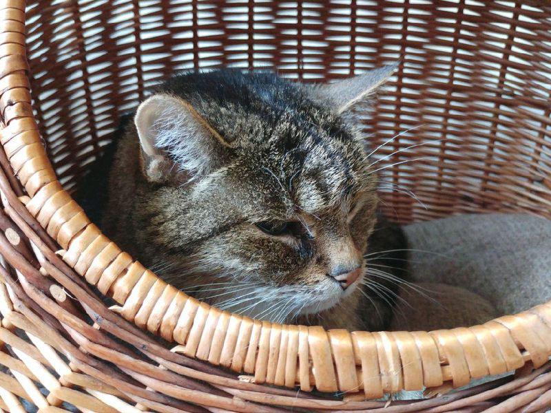 19-letni kot w koszyku