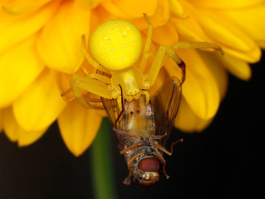 Kwietnik i mucha